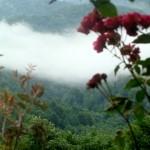 затерянный мир, туман, розы